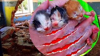 Спасение диких котят на ЗАБРОШКЕ! Самая трогательная история ВЛОГ!