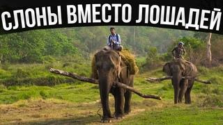 Слоны вместо лошадей! Смотри как живут люди в деревнях Непала!