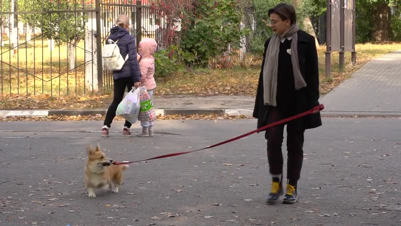 Такая тема Как содержать собаку в городе