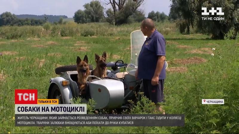 Новини України житель Черкаської області привчив своїх вівчарок і такс їздити з ним на мотоциклі
