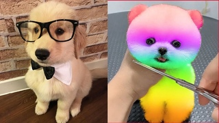 Cutest Puppy In The World 2021 | Funny And Cute Pomeranian Puppies Tiktok | Cute Baby Animals