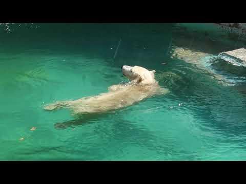 2 9 Aug 2021 Shilka and Hochan at Tennoji zoo Osaka Japan