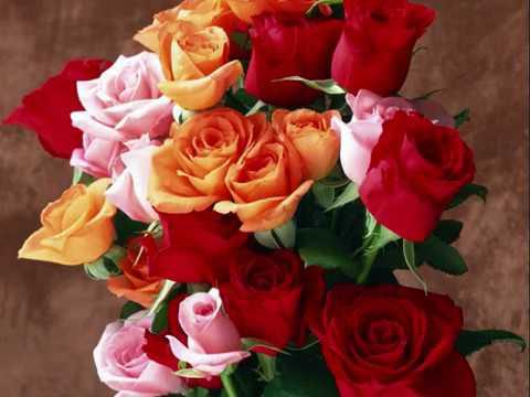 Андрей Шпехт А розы отцвели
