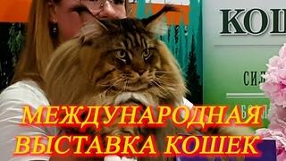Москва. Июнь 2021 г.  ВДНХ. Международная выставка кошек.