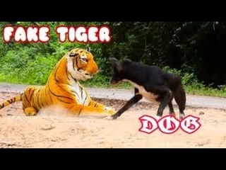 #Warrior  Wow!!! Tiger Prank Dog  Funny Try To Stop Laugh vs Funny Shampoo prank on beach