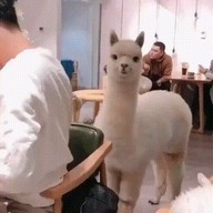 id_50465 Тем временем в одном из кафе в Японии 😁  #gif@bon
