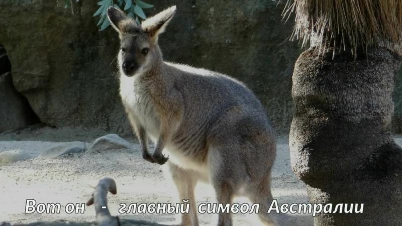 Зоопарк Taronga Zoo Австралия