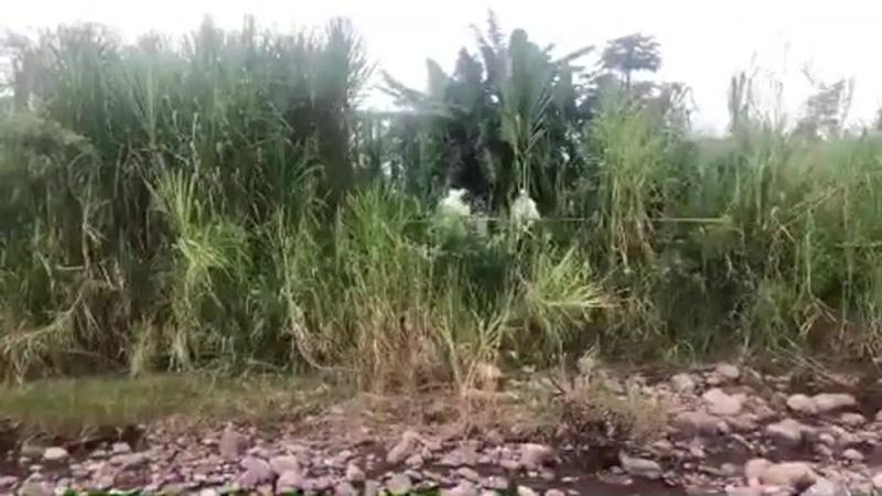 29 10 2020 КОЛУМБИЯ Villavicencio из прямого эфира Nuestro Llano TV на месте закопанной жертвы убийства