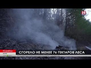 #Планета + Беспорядки в Ираке, лесной пожар в Японии, «утонувшее» кладбище в Италии