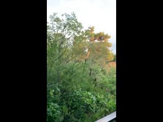 Видео от Светланы Плющаковой