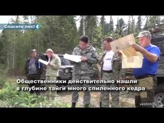 Жители Тайшетского района требуют защитить от вырубки кедровый лес