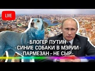 Путин станет блогером / Умерла самая полная россиянка / Пармезан — не сыр / Синие собаки в мэрии