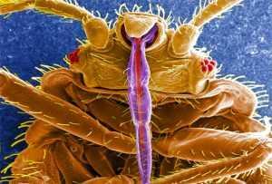 Новинка: средство Инсект Контроль от клопов