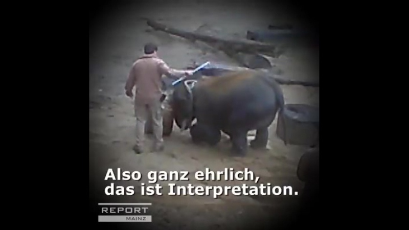 Geschlagene Dickhäuter Zoo Hannover