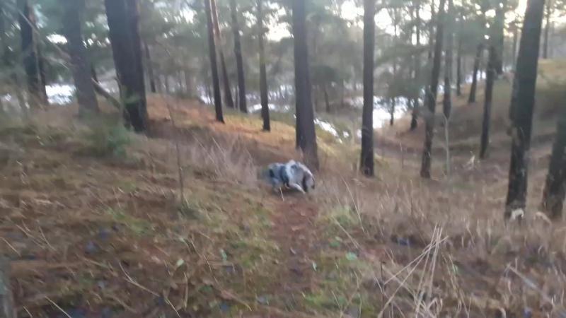 Банда собак в лесу))