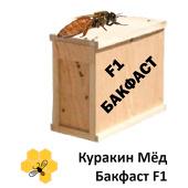 Пчелопакет Бакфаст 4/6/10 рамок