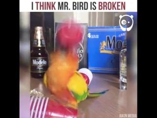 Bored Panda - I think Mr. Bird is broken By Jukin Media