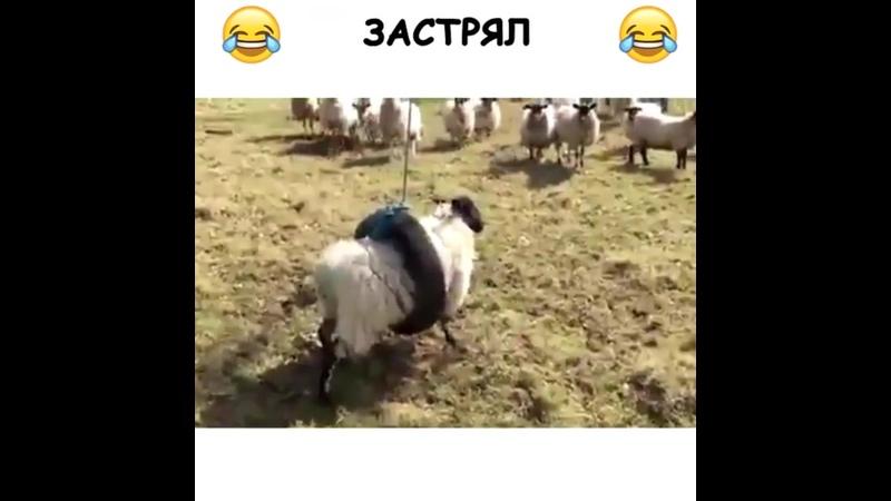 Eine Schaukel für die Schafe