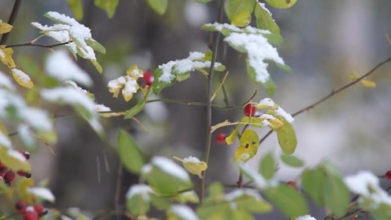 Первый снег. Владимир Юхно и группа