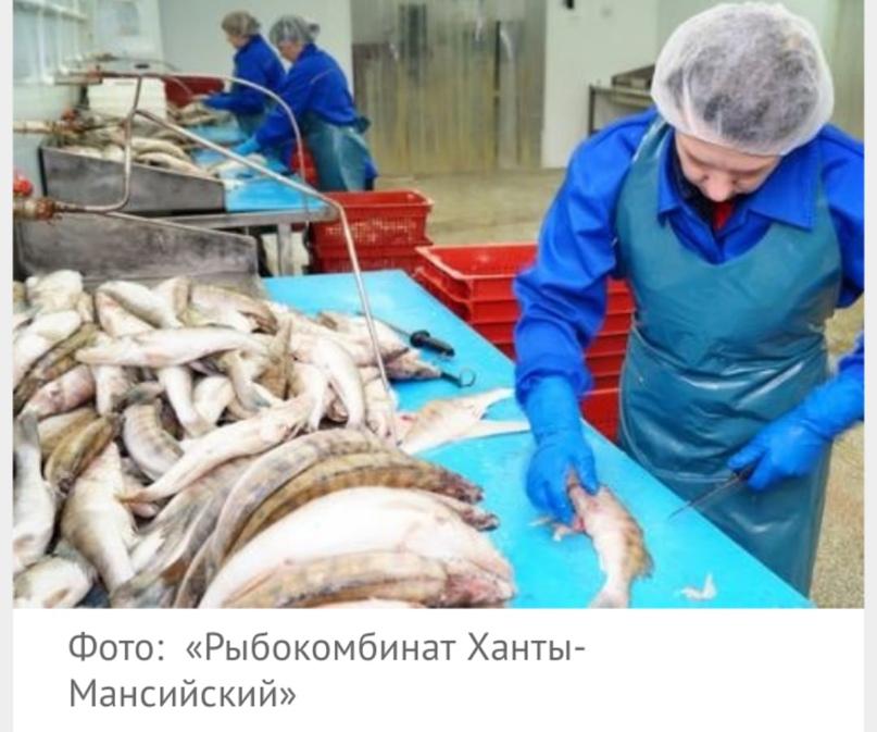 Главный рыбокомбинат ХМАО будет выпускать шоколад