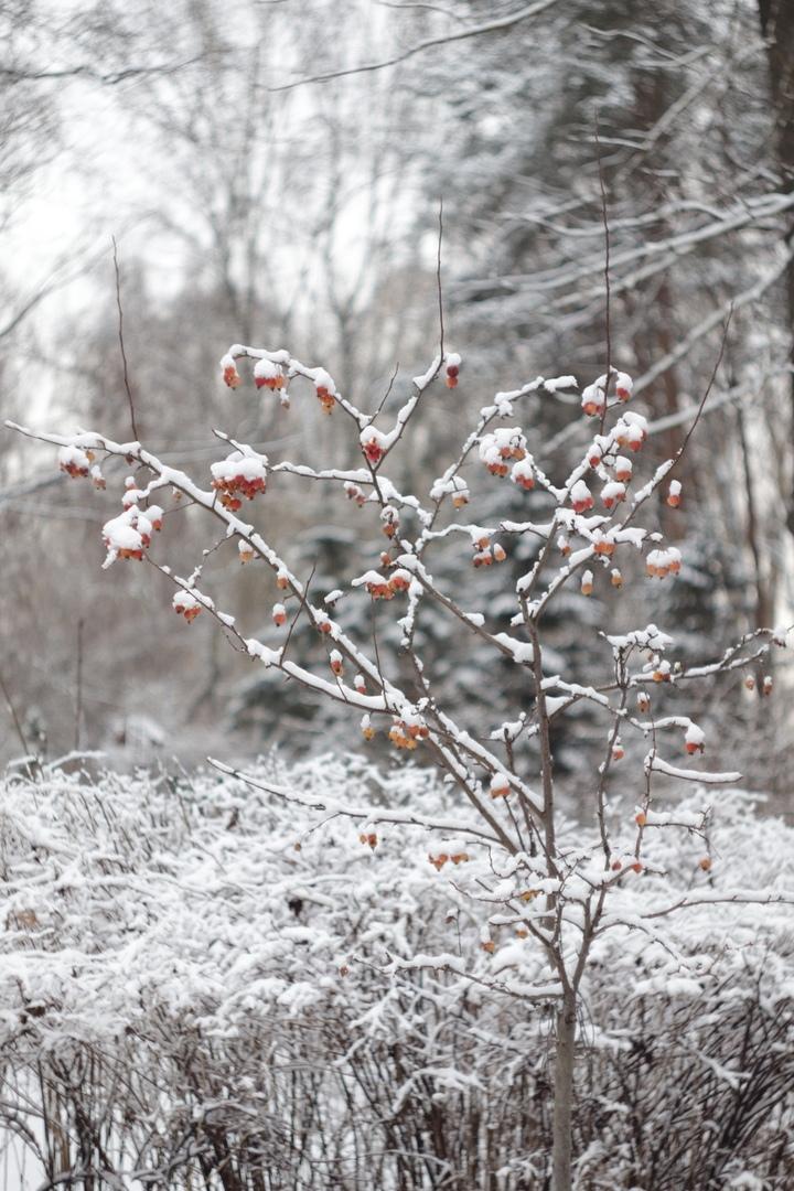 Фотограф рассказала о молчаливом и величественном Тверском ботаническом саде