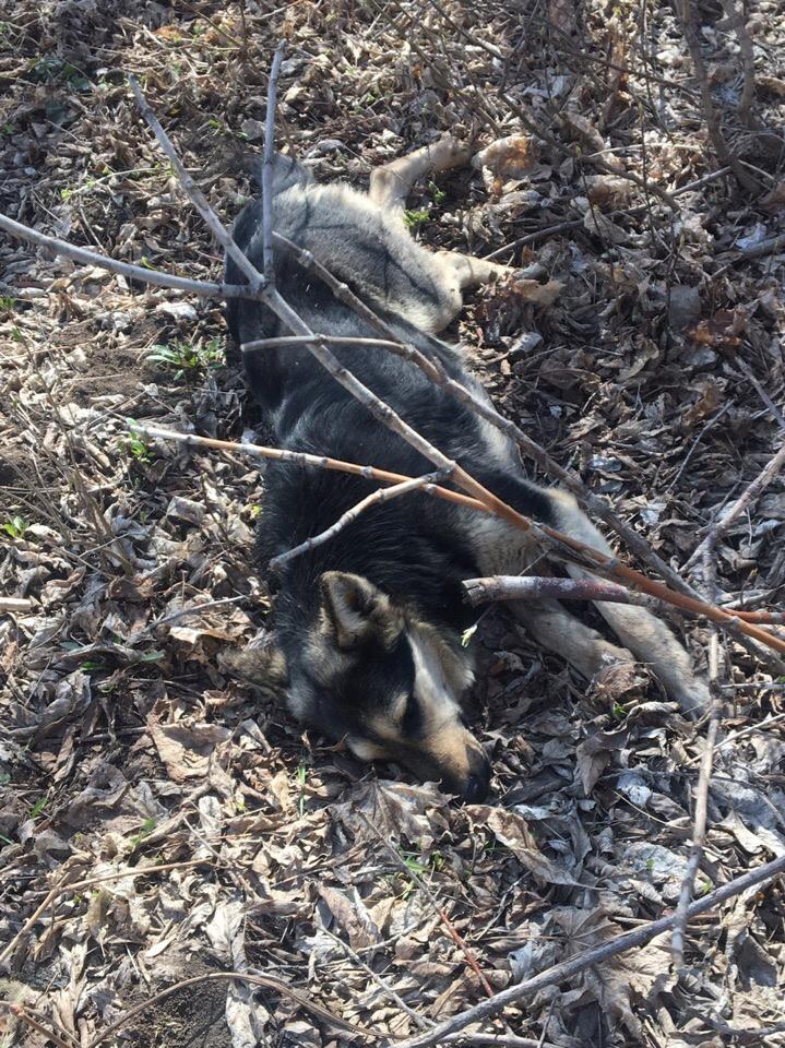 Возле ТЭЦ сбили собаку, собака живая. На