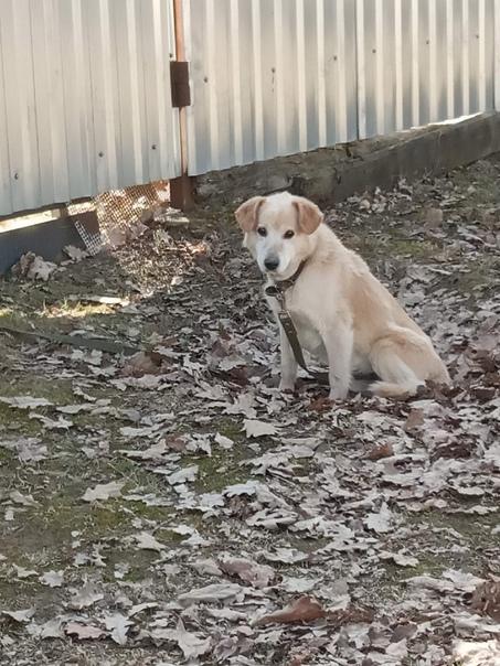 Пропала собака в посёлке Волгино, ушёл 25.10 из до...