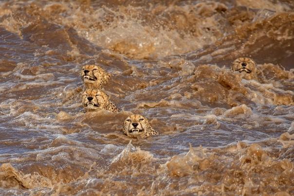 Лучшие фотографии животных и дикой природы 2021 года по версии экологической организации The Nature Conservancy