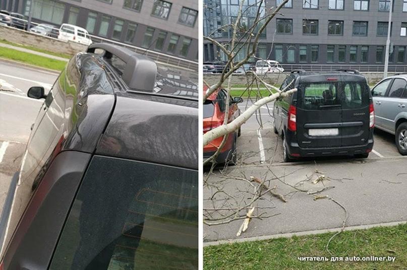 В Минске сильный ветер: на авто падали деревья и цветочный киоск