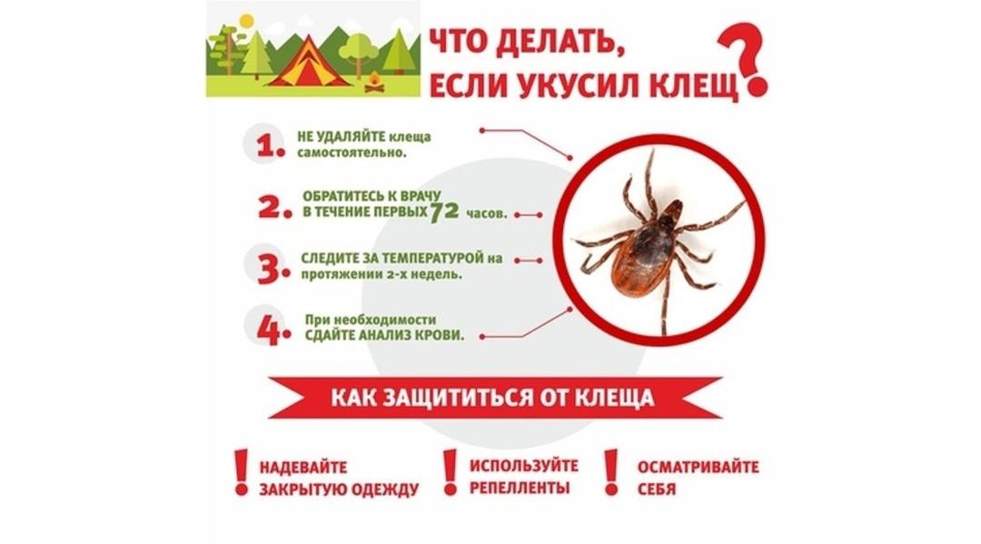 Специалисты МЧС России дали гражданам рекомендации о том, как эффективно защититься от клещей