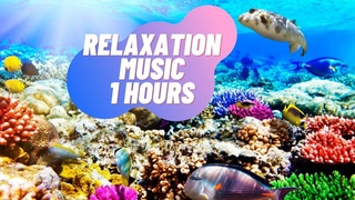 Beautiful relax music for sleeping