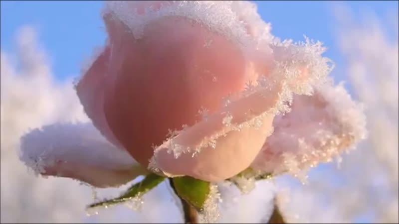 Агурбаш Анжелика Роза на снегу клип создан Татьяной Трифоновой г Архангельск