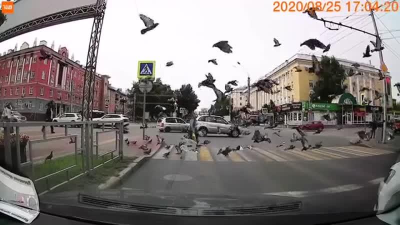 Королева голубей Чёрное и Белое Барнаул