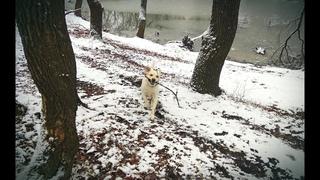 ВЛОГ: ПРОГУЛКА С ЛАБРАДОРОМ | ГУЛЯЕМ С СОБАКОЙ В ЛЕСУ  ||  Vlog: a walk with a  labrador retriever