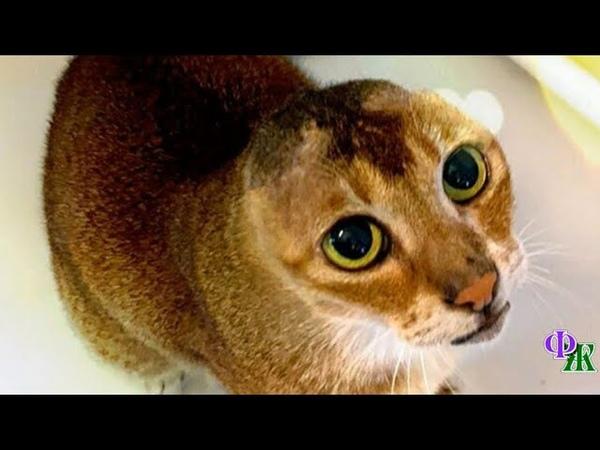 Безухий кот долгое время скитался по улицам один собирая объедки и выживая из последних сил