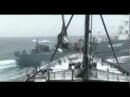 The Whale Wars Elca Maranzana and Eamon Anderson