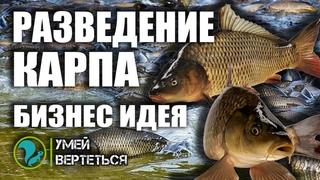 Разведение карпа. Рыбное хозяйство как бизнес идея.