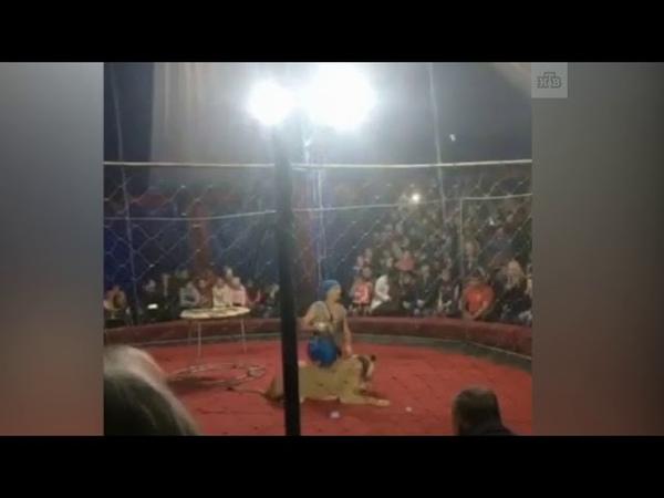 Львица напала на ребенка в цирке на Кубани