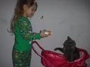 Видео для детей, играем в куклы/Нина посадила кота в игрушечную коляску/приколы про кошек