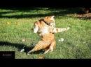 Смешное видео про весёлых котов и кошек!Забывные животные!Прикольная подборка с