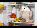 😸 Ох уж эти кошки!🐈 Подборка приколов с котами для хорошего настроения! 😸